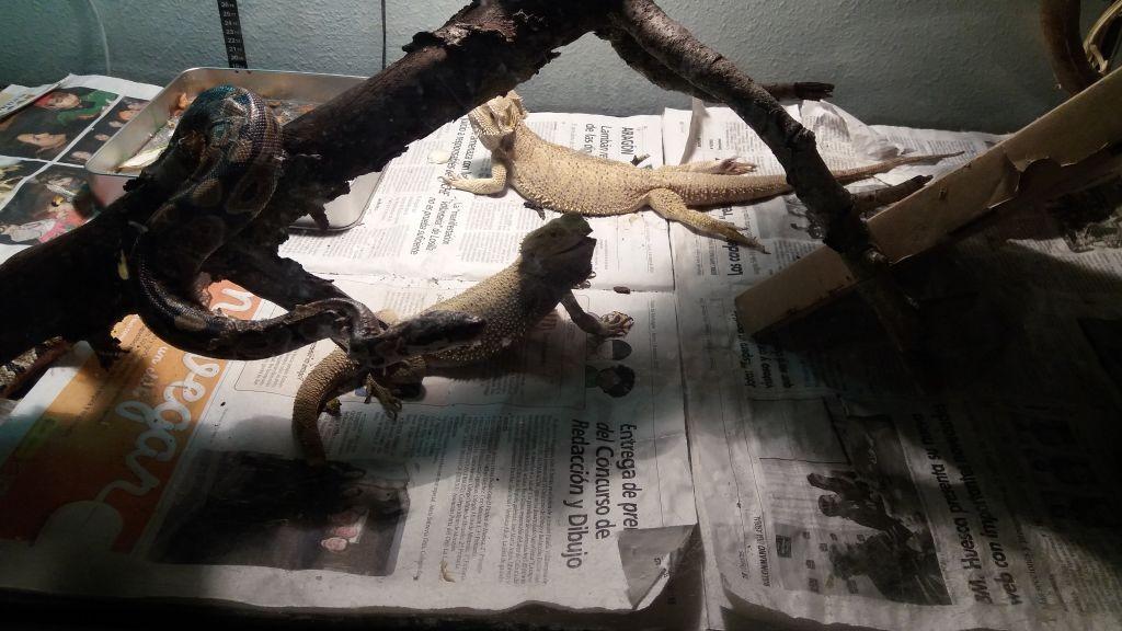 anisclo_huesca_biologia_serpiente_20160304_183114